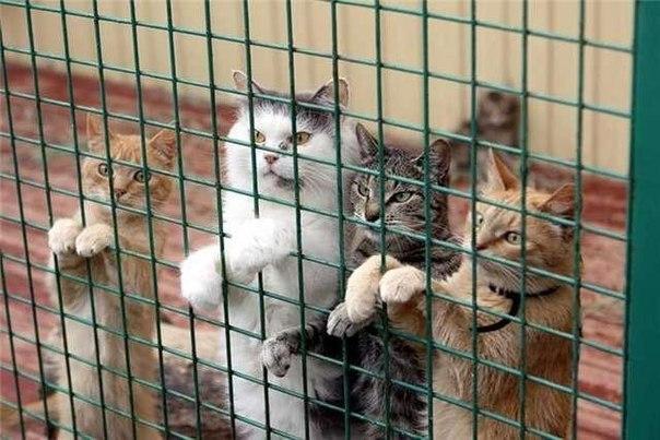 Отдать кота в приют для кошек