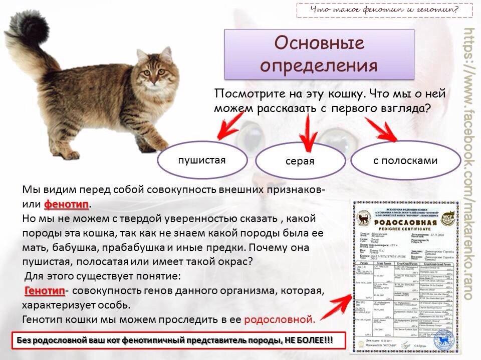 Как на котенка сделать документы на 534