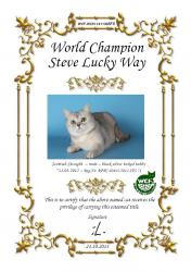 WCH(WCF) Steve Lucky Way, кот скоттиш-страйт